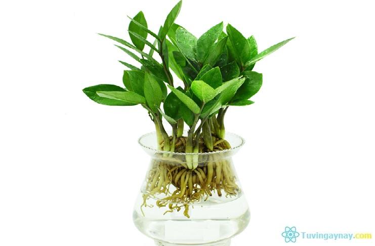 Người mệnh Thủy hợp cây gì, trồng cây nào hợp theo phong thủy?