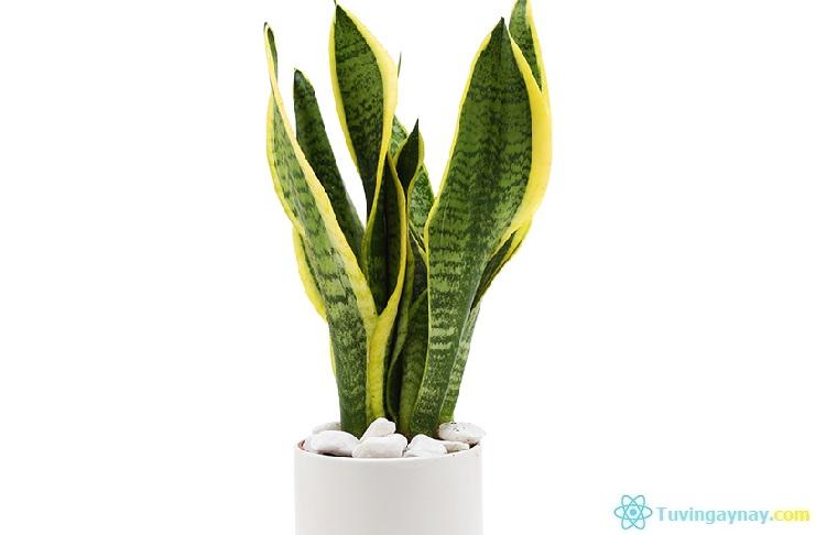 Người mệnh Hỏa hợp cây gì, trồng cây nào hợp theo phong thủy?