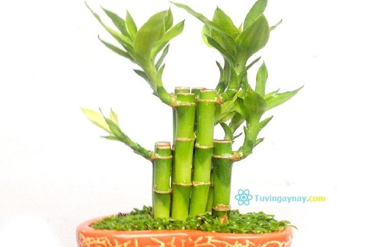 Tuổi Giáp Dần hợp cây gì, trồng cây nào hợp mệnh theo phong thủy?