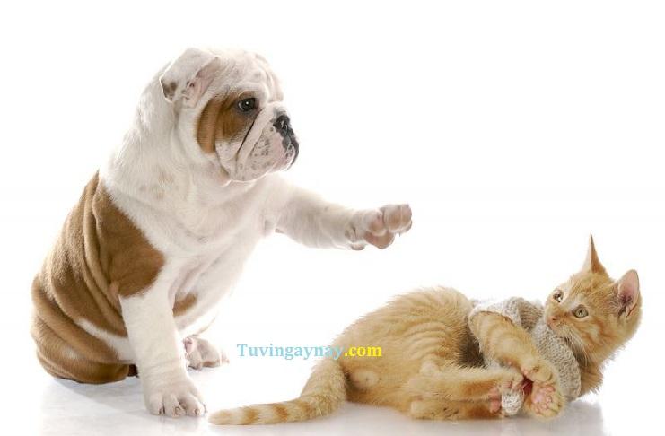 Mèo đến nhà thì khó chó đến nhà thì sang: Hiểu làm sao cho đúng?