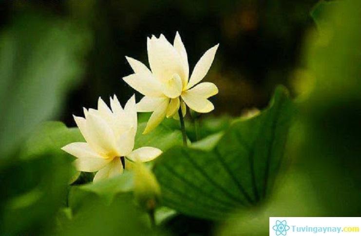 Lời Phật dạy về 10 nghiệp lành mang lại phước đức