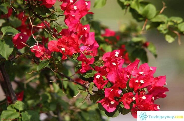 Tuổi Đinh Dậu hợp cây gì, trồng cây nào hợp mệnh theo phong thủy?