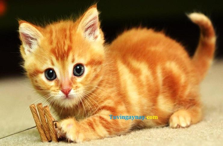 Mèo chạy vào nhà có điềm báo gì, là điềm tốt hay xấu?