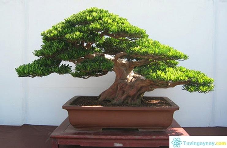 Tuổi Tân Mão hợp cây gì, trồng cây nào hợp mệnh theo phong thủy?